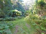 1748 Quart Pot Road Buckenbowra, NSW 2536