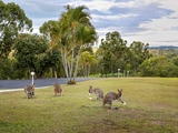 16 Glenrowan Drive Tallai, QLD 4213