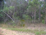 LOT 55 Belar st Lamb Island, QLD 4184