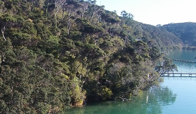 Pt Lot 96 North Cove Kawau Island property image