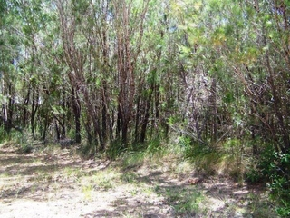 Lot 17 Belar Street Lamb Island , QLD, 4184