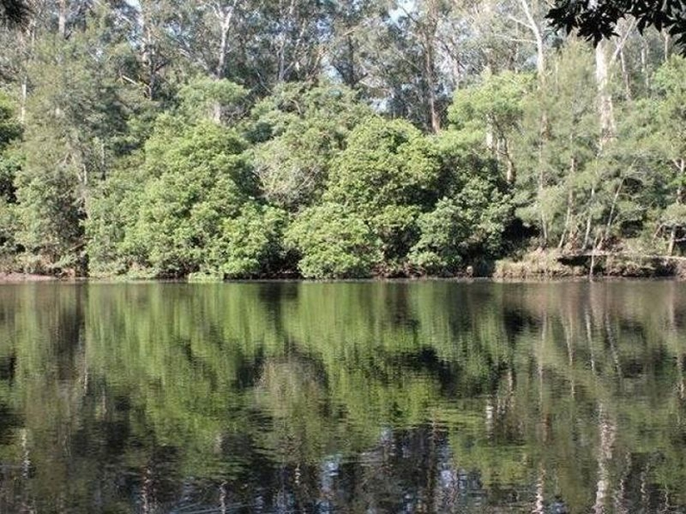 406 Backhouse Forest Road Mogood, NSW 2538